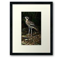 Bush thick knee. Framed Print