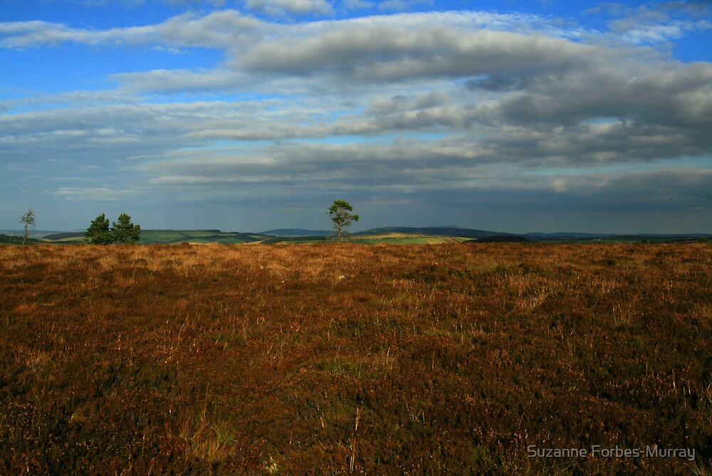 Heather Moor  by Suzanne Forbes-Murray