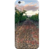 Vineyard in Tuscany iPhone Case/Skin