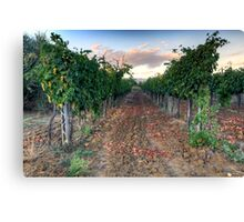 Vineyard in Tuscany Canvas Print