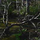 The Swamp by glink