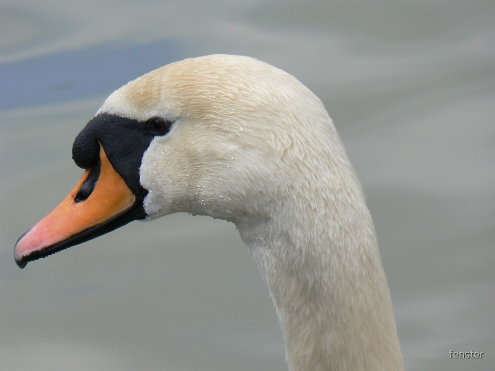 Close-up swan by fenster