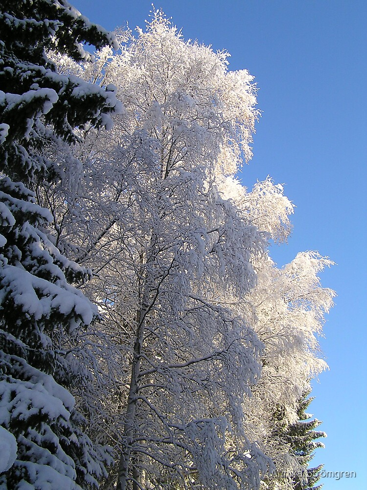 Winter trees by Annika Strömgren