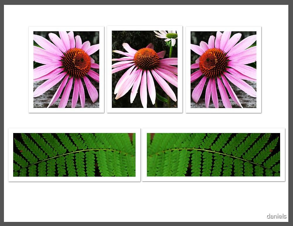 flower & fern by daniels