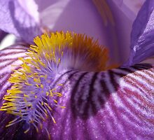 Iris' Tongue II by Scott Ruhs