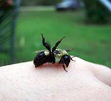 bumble bee by tomcat2170