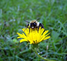 small flower and bumblebee by tomcat2170