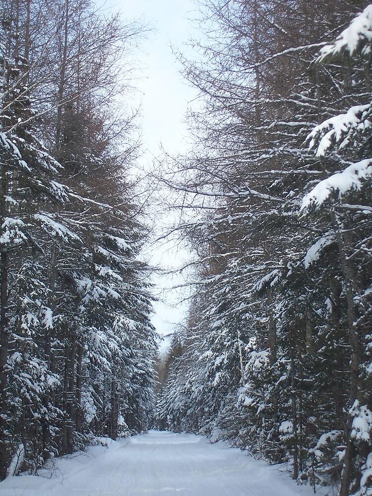 Winter Trail 1 by Gene Cyr