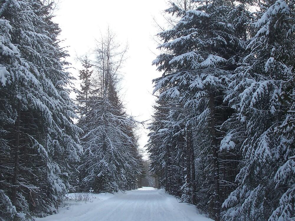 Winter Trail 3 by Gene Cyr