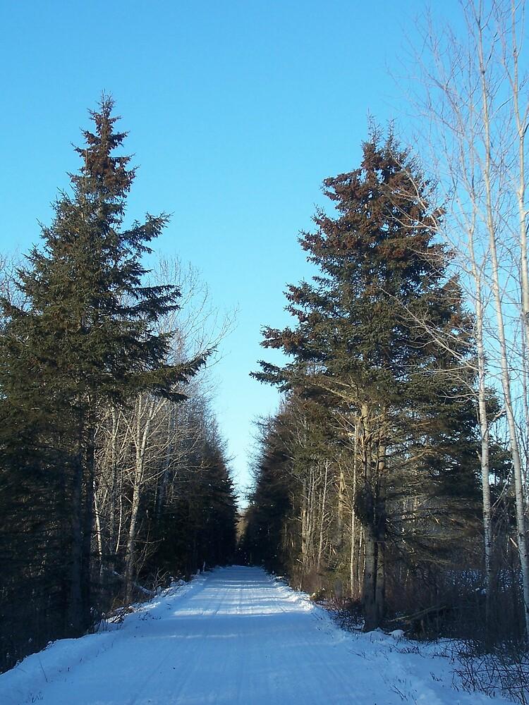 Winter Trail 5 by Gene Cyr