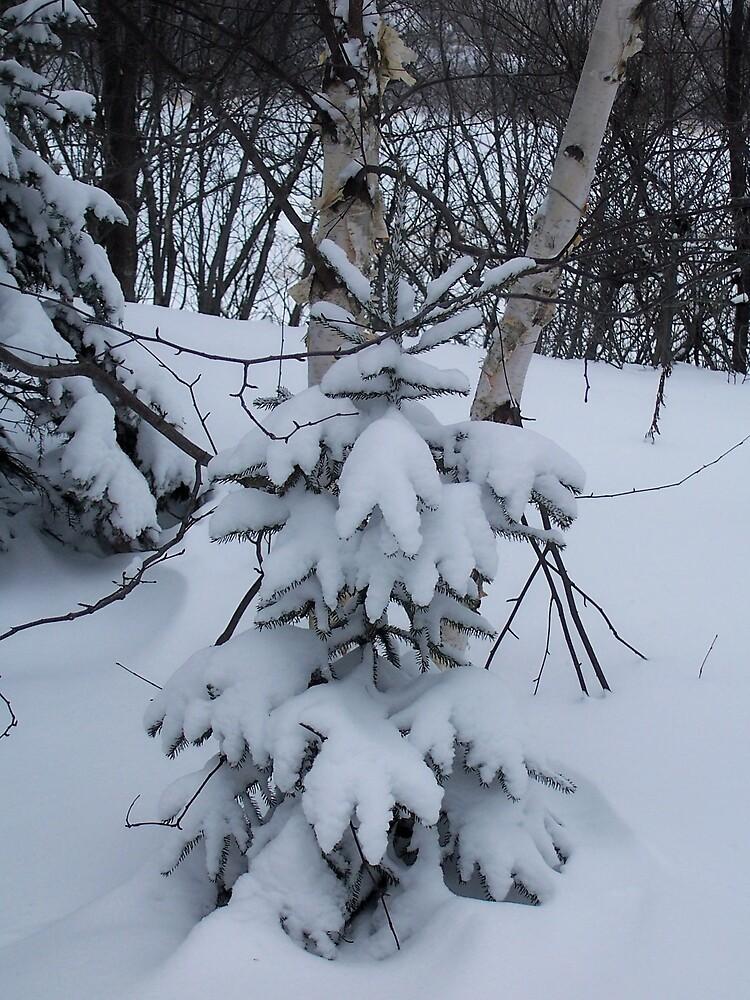 Snow Covered Spruce by Gene Cyr