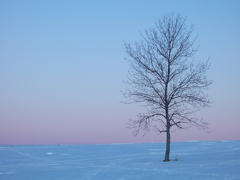 Winter Blue 3 by Gene Cyr