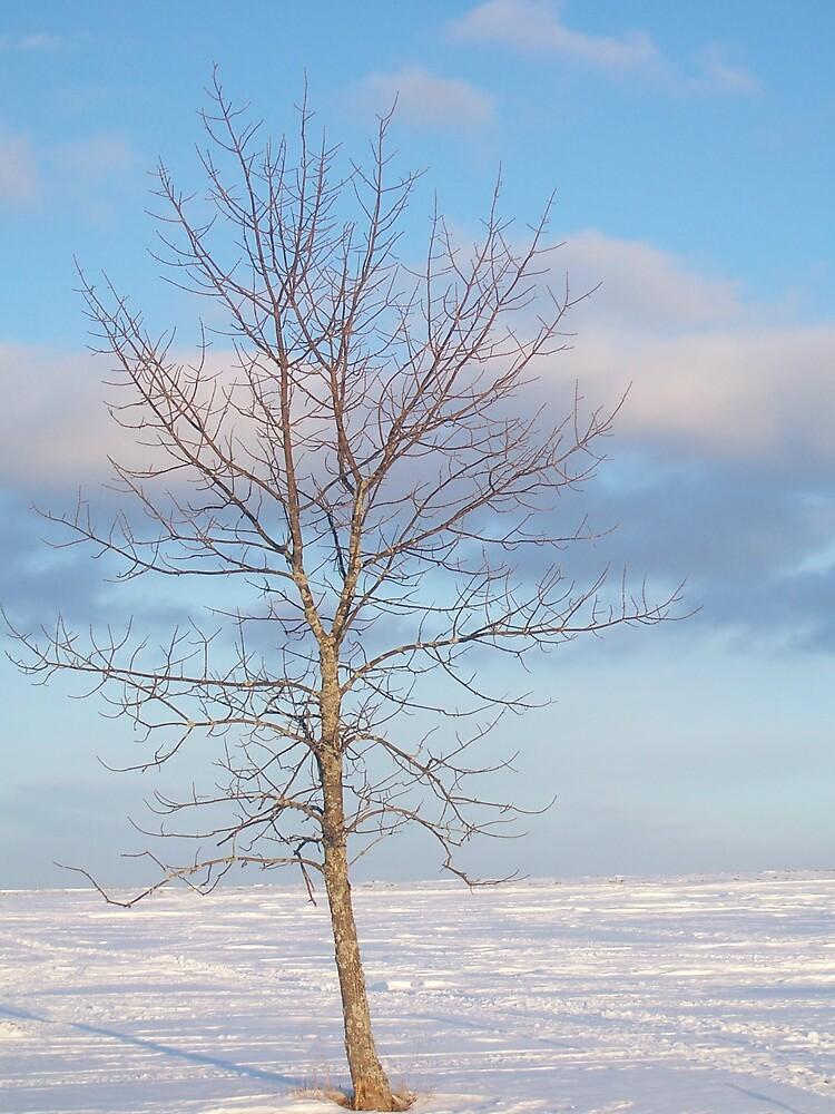 Cloudy Tree 1 by Gene Cyr