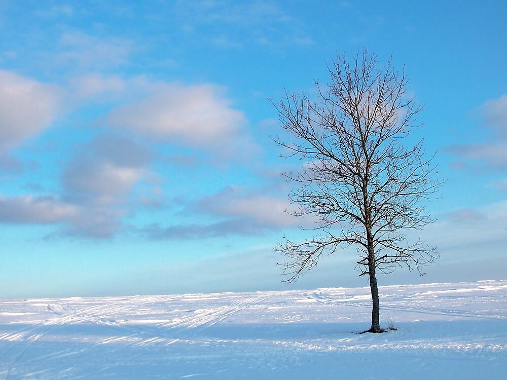 Cloudy Tree 2 by Gene Cyr