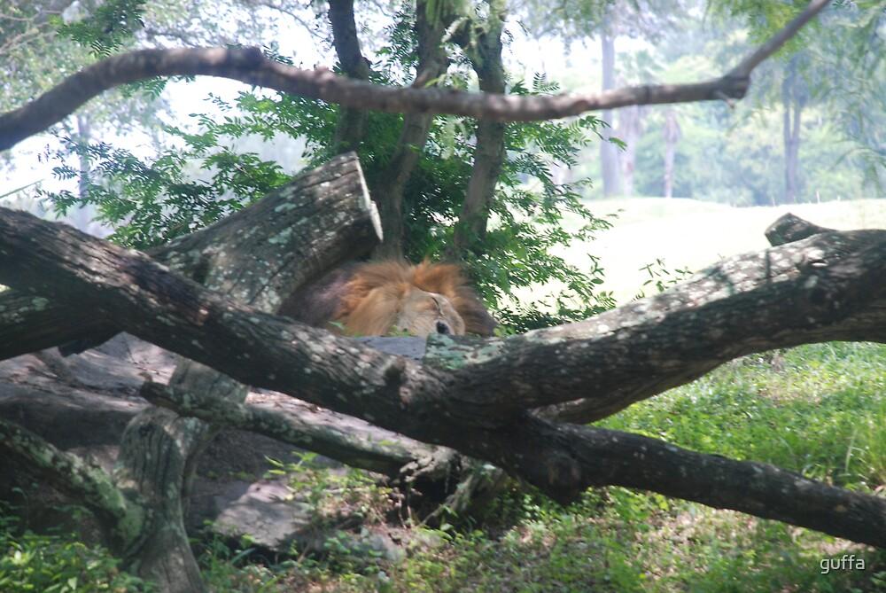 Lazy Lion by guffa
