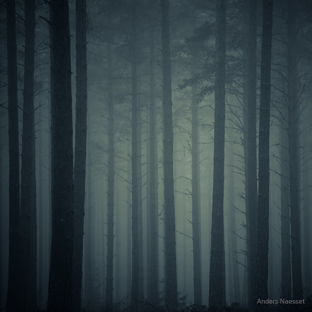 The Pine Forest by Anders Naesset