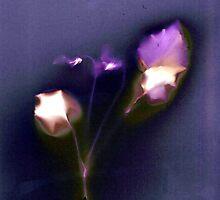 violets by jadetamara