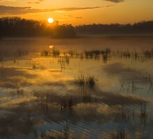 Ripple into Fog by David Linkenauger