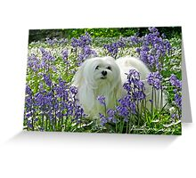 Snowdrop the Maltese -  in the Bluebell Woods Greeting Card