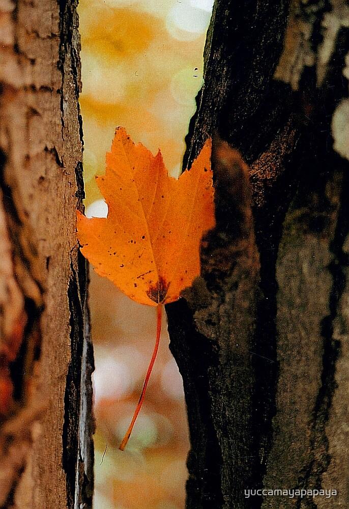 autumn in wisconsin by yuccamayapapaya