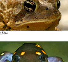 Amphibian conservation Sticker