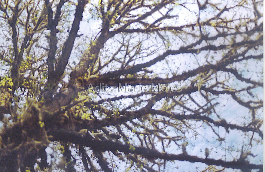 Branching Out by Arlita Marie Moles