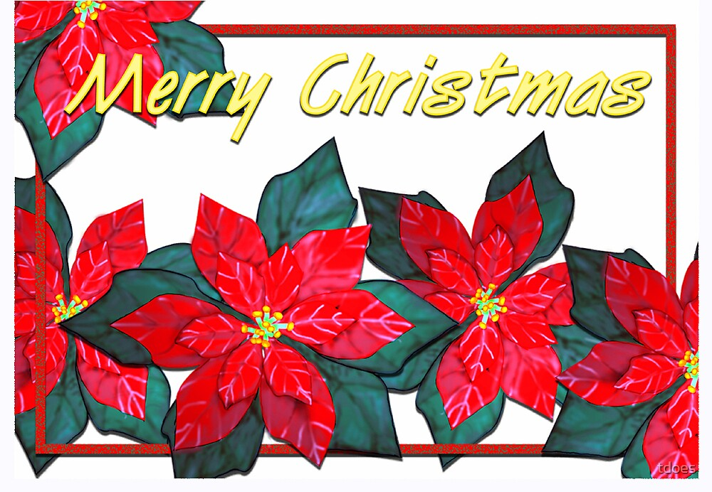 Pointsettia Christmas Card by tdoes