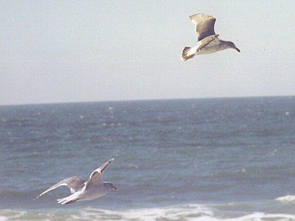 Seagulls Flight by Arlita Marie Moles