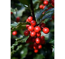 Holly Holidays Photographic Print
