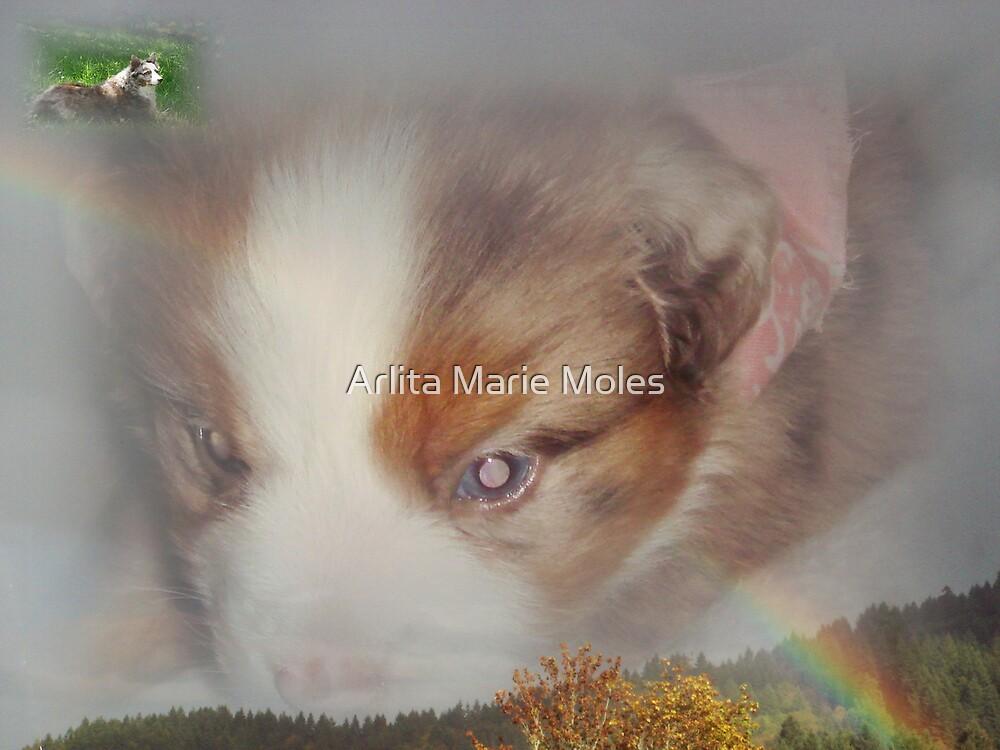 Watching Over  by Arlita Marie Moles