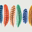 Colorful Birds by Zeke Tucker