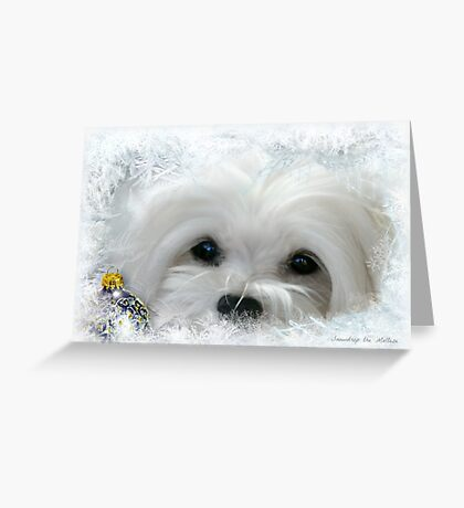 Snowdrop the Maltese of the Frozen North ! Greeting Card