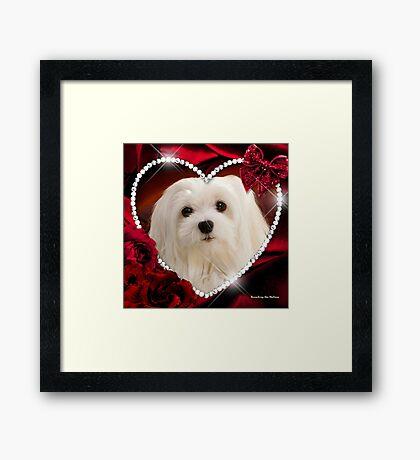 Snowdrop the Maltese - Sweet Valentine Framed Print