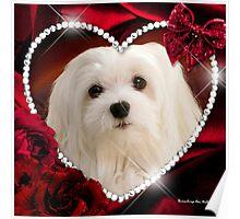 Snowdrop the Maltese - Sweet Valentine Poster