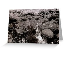 morning in the cascades Greeting Card