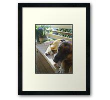 Shepard Framed Print