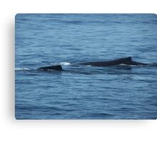Humpback Mother and Baby Canvas Print