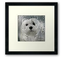 Snowdrop the Maltese - Spring Showers Framed Print