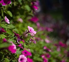In to the flowers by danivazquez