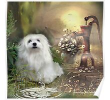 Snowdrop the Maltese at The Wishing Well Poster