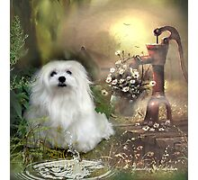 Snowdrop the Maltese at The Wishing Well Photographic Print