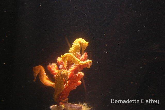 Seahorses by Bernadette Claffey