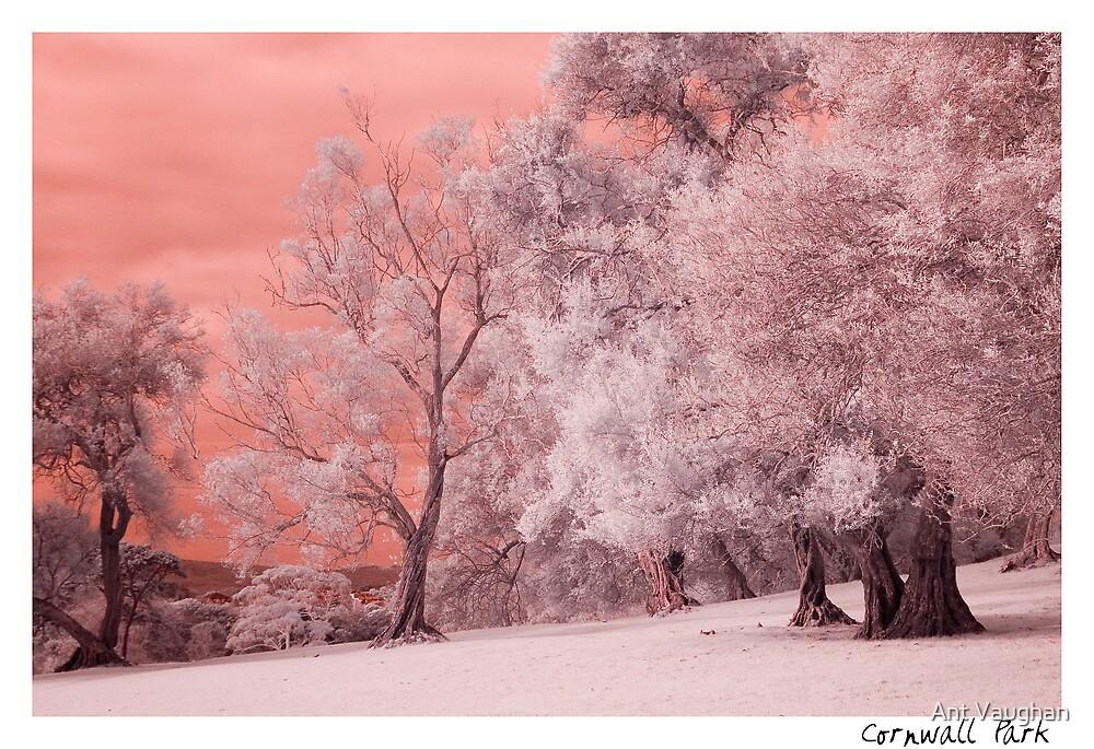 Cornwal Park IR by Ant Vaughan