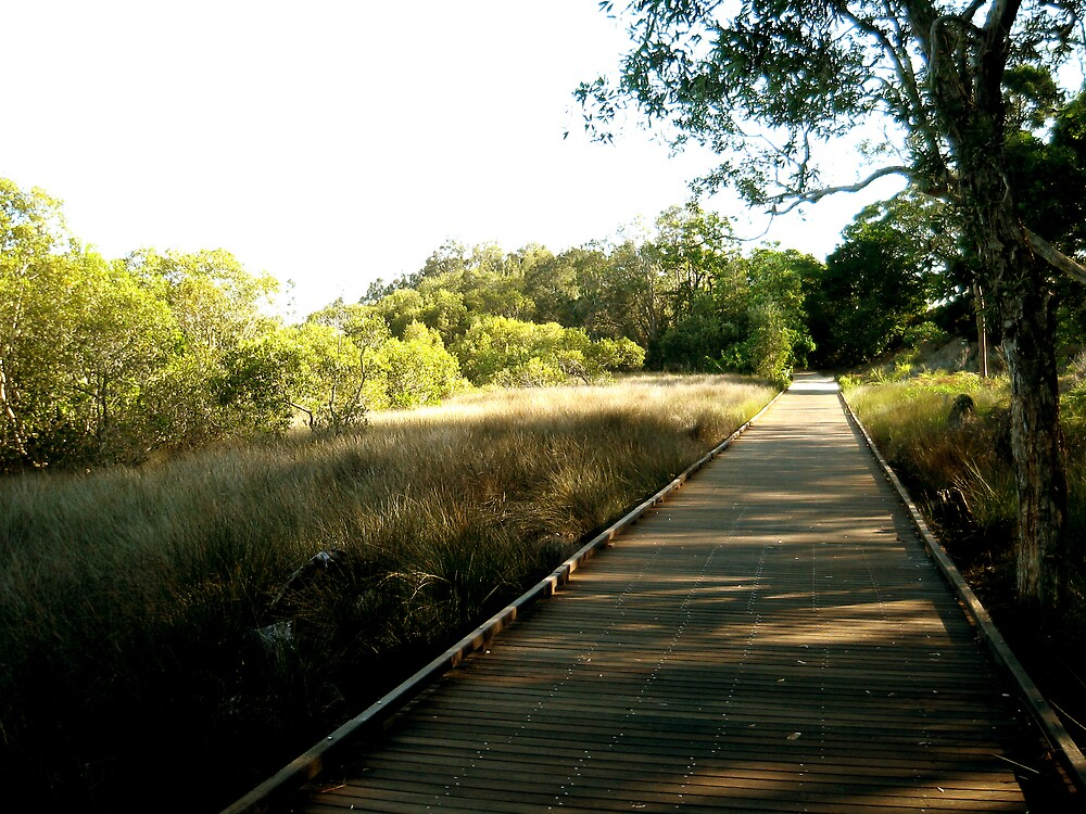 Mangroves Boardwalk by Rhapsody