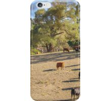 Cattle in the Adelaide Hills iPhone Case/Skin
