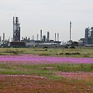 Refinery plus Carporbrotus modestus by marijkasworld