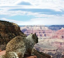Squirrel Overlooking Grand Canyon by Gravityx9