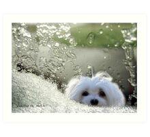 Snowdrop the Maltese - Please May I Come In ? Art Print