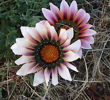 wild flower by rhysy