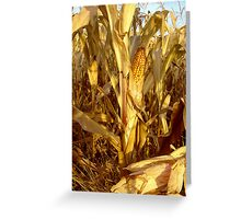 Indian summer with popcorn Greeting Card
